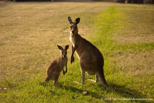 Mother with Joey